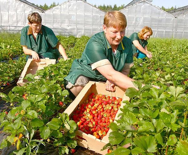 9 công việc phổ biến trong mùa hè